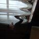 img_20201216_124621 - Чистка штор, чистка мягкой мебели, химчистка штор в Москве, stirkashtor - услуги химчистки штор